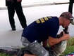 Trapper's Roadside Gator Rescue Ends With a Kiss (Video)