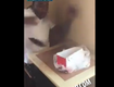 Woah! Man Finds A Live Rat In His Box Of KFC Chicken!