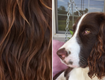 Dogs Inspiring The Latest Wacky Hair Trend On Twitter