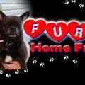Furever Home Fridays