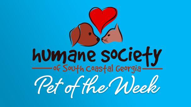 Humane Society of South Coastal Georgia's Pet of the Week