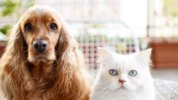 image for Dog & Cat team up for scooter world record