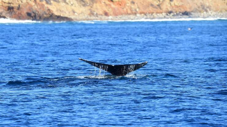 New Lawsuit Aims to Protect Endangered Whales in SoCal