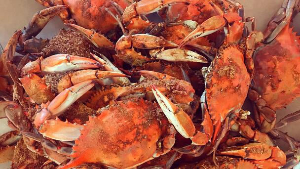 LAMAR JACKSON AND BALTIMORE RAVENS PICKING AND EATING STEAMED CRABS. FUNNY!