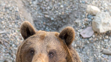 image for Teen fights off bear to save her dogs