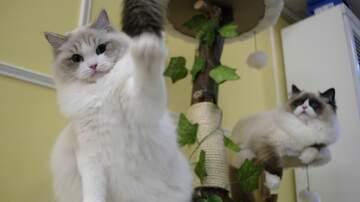 image for Kittens wrestling - new sport?