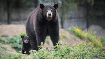 image for WATCH:  Mama Bear and cub playing on Playground!