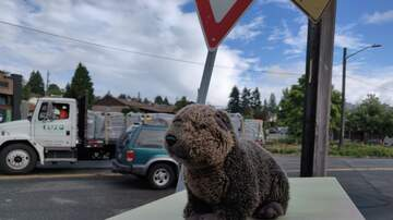 Where Has Sarah's Beaver Been? - Where Has Sarah's Beaver Been? 1/10