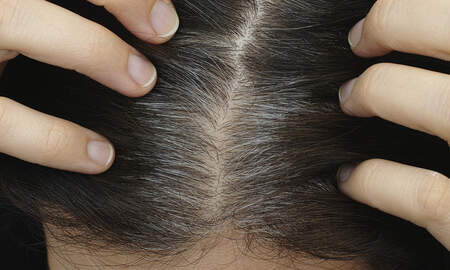 Local News - New Harvard Study Says Stress Can Turn Your Hair Gray