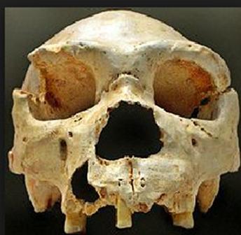 shrinking skulls