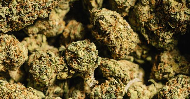 weed marijuana getty
