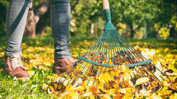 JP - Here's Why You Should Skip Cleaning Up Leaves This Fall