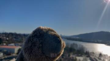 Where Has Sarah's Beaver Been? - Where has Sarah's Beaver Been? 1/18