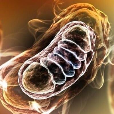 Damaging Molecule