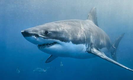 Local News - More Weekend Shark Sightings Lead To Beach Closures