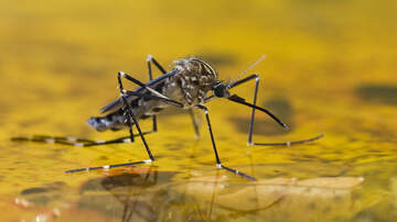 Local News - Second Round Of Mosquito Spraying Begins This Week