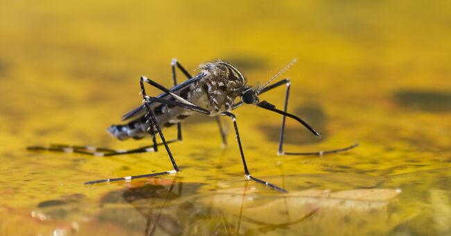 EEE, West Nile Virus No Longer A Threat In Massachusetts In 2019