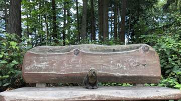 Where Has Sarah's Beaver Been? - Where Has Sarah's Beaver Been? 6/28