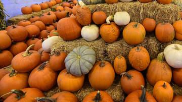 Anne Hudson Online - The Best Pumpkin Patches in Austin