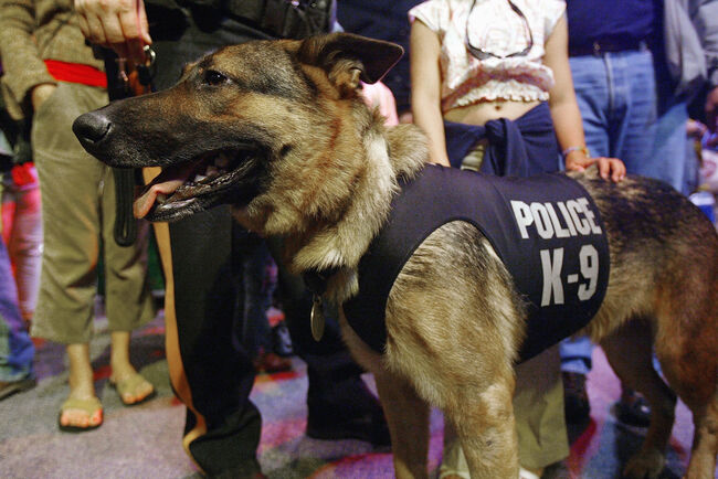 Rescue And Service Dogs Honored For Service