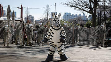 image for Phone Tap - Zebras Have Wangs