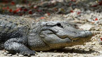 Lori - Tennessee Police: Please Don't Create Meth Gators By Flushing Drugs