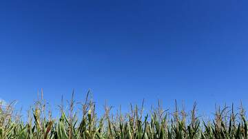 KFAB Ag News with Karla James (58466) - Iowa Crop Conditions Report