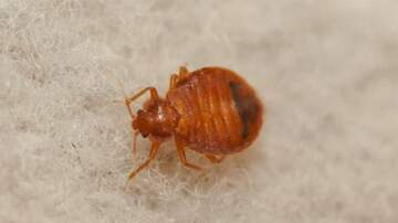 Brooke and Jubal  - Phone Tap: Don't Let The Bed Bugs Bite