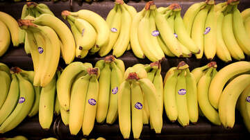Danny Spanks - Kern County Animal Services needs... bananas?!?