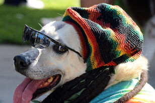Here Are the 10 Most Popular Pet Costumes This Halloween: No Bob Marley