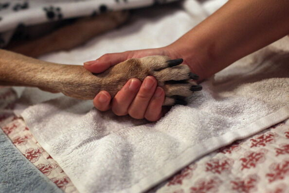 Veterinarian Makes Home Visits To Euthanize Dying Pets