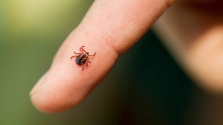 The Warm Weather Is Here In New England And So Are Ticks