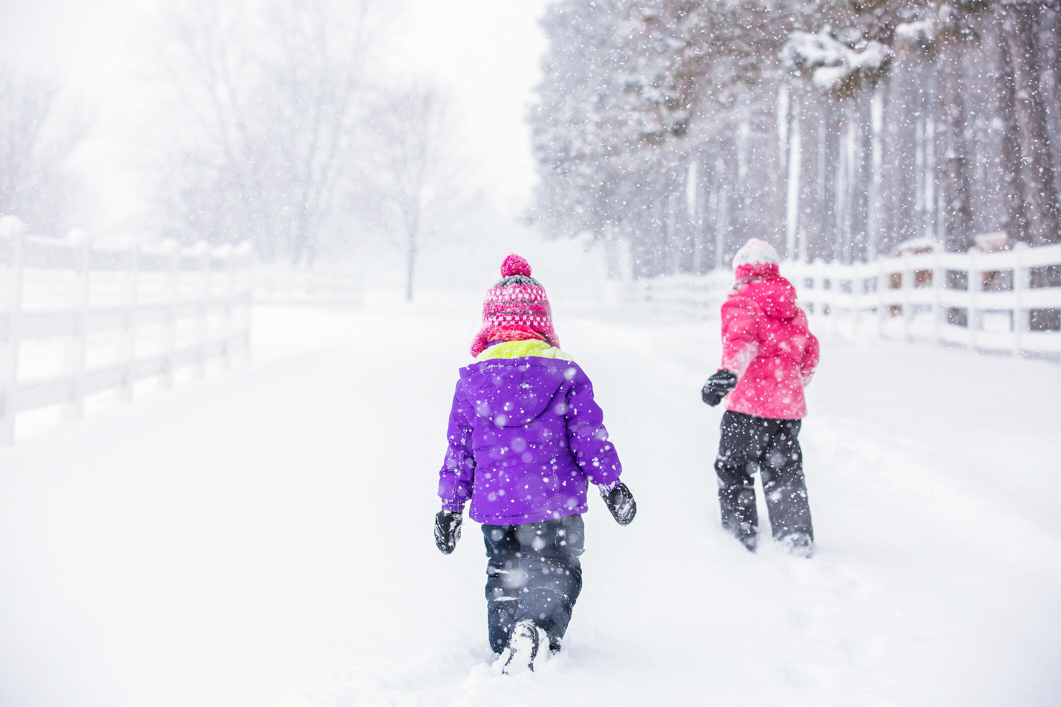 Rear view of two young girls (sisters) in purple and pink going for a walk on the ranch during a winter snow storm.