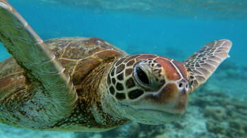Joel - It's Sea Turtle Nesting Season: Tips From Loggerhead Marinelife Center