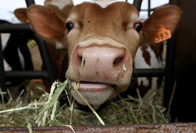 Plummeting Price Of Milk Leaves Dairy Farms Struggling For Profit
