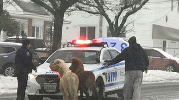 image for Ponies on the Loose in Staten Island During Winter Storm