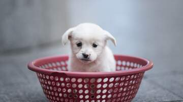 Edgar Ivan - Celebra a tu mascota hoy, National Pet Day!