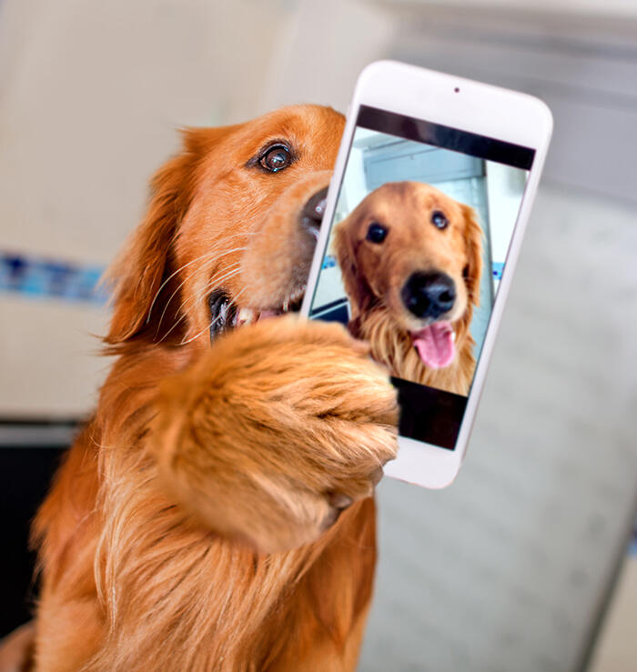 Cute dog taking a selfie with a cell phone