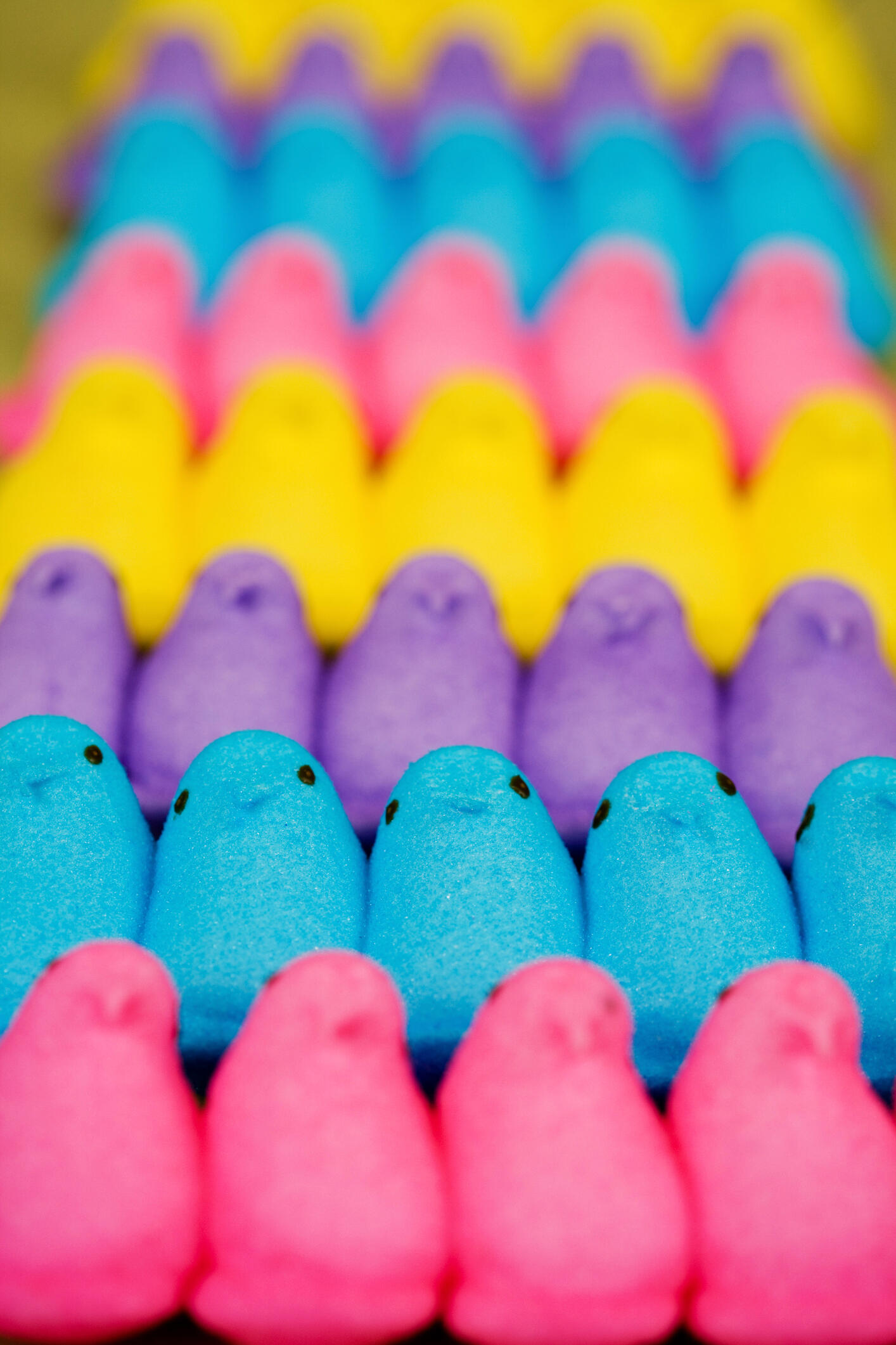 Colorful Easter Peeps candy, Baby chicks  marshmallows