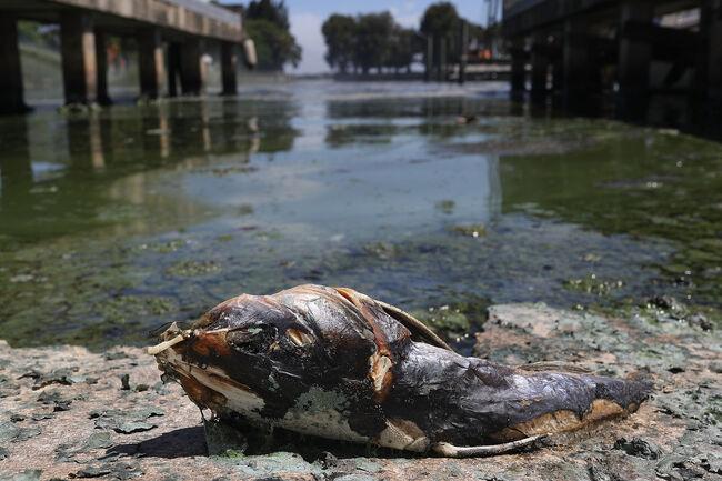 Massive Algae Blooms Continue To Plague Florida's Atlantic Coast