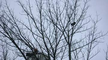 Jillian - Utility Workers Save Cat Stuck in Tree for Days