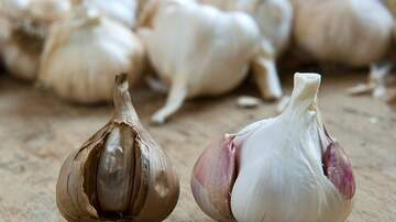 West Michigan's Morning News Blog (35853) - Shmitty and the Garlic Thief