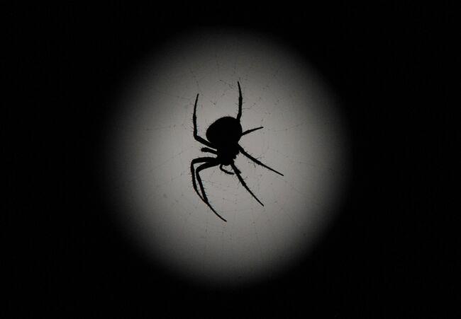 KYRGYZSTAN-NATURE-SPIDER