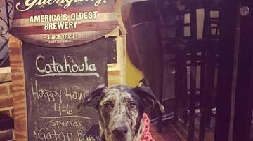Tell Me Something Good - YAPPY HOUR!