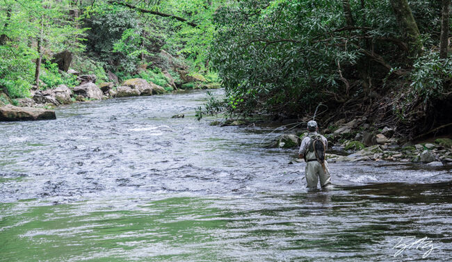 A Fly Fisherman casts for trout.