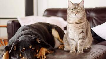 None - Spay Today - Get Your Cat/Dog Spayed or Neutered at Reduced Price
