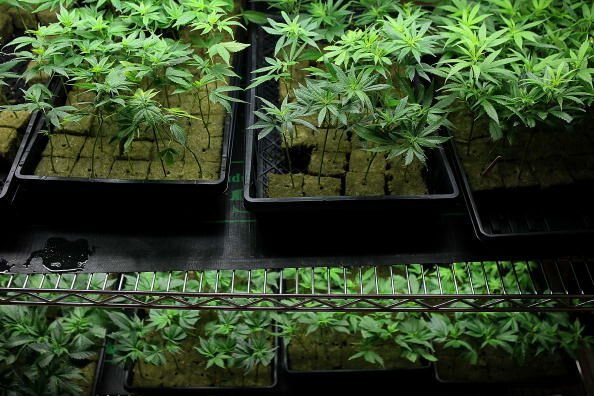 Mass Lawmakers Looking to heavily tax pot.