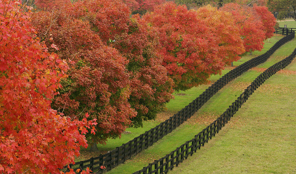 Lexington, UNITED STATES:  A fence row along the pasture of the Pleasant Green Fame is shown 31 October 2005 outside of Lexington, Kentucky as the trees change colors on a Fall afternoon. The autumn temperatures are dropping, but not all the leaves have f