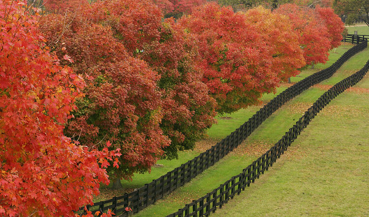 A fence row along the pasture of the Ple
