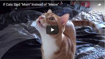 Todd Berry - FUNNY: What If Cats Said MOM Instead Of MEOW! Now we know..